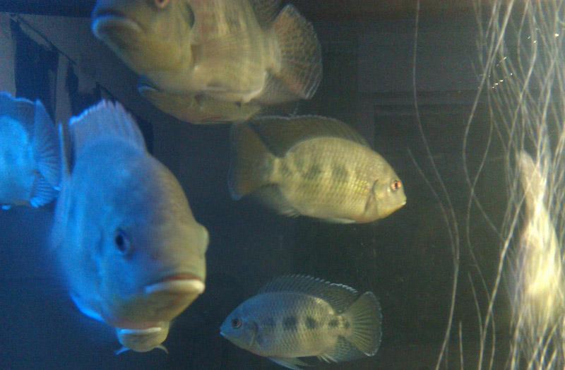 Die Fische ziehen ein