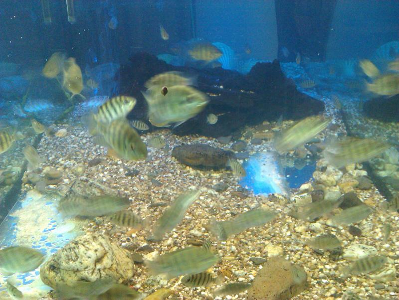 Pflanzen und Jungfische am 27. Juni