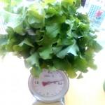 salat_waage