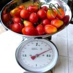 tomaten_ernte