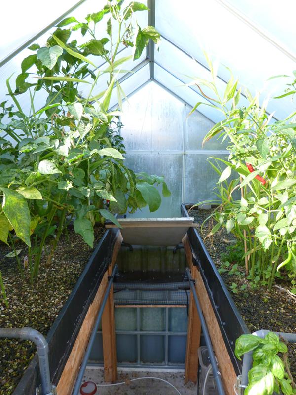 Pflanzenernte im Oktober und zwei Zwischenfälle
